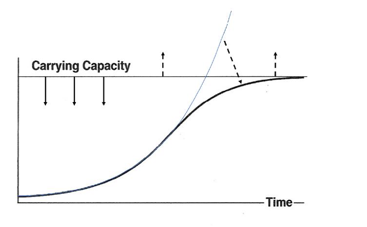 Het punt waarbij een exponentiële groei ombuigt in een progressieve vertraging, richting een dynamische balans, wordt het inflectie-punt genoemd.