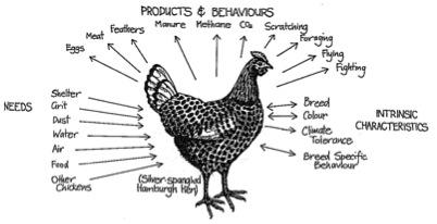 plaatje van een kip, diens behoeften, karakteristieken, gedragingen en 'producten'