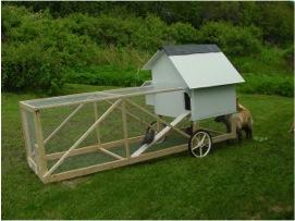 kippen zijn geweldig om de tuin te bemesten – deze verplaatsbare kippenren maakt het particulieren gemakkelijk kippen te houden en te benutten voor eieren én bemesting